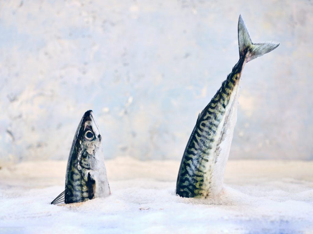 Old Fish copywriting Explosion Marketing
